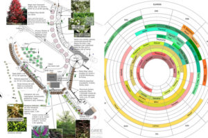 Orchard & Avenue Planting Specification & Ripening Chart Joss & Steve